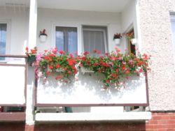 Noclegi w Tanie komfortowe mieszkanie Muszelka Rogowo 61e/2 - 601628144