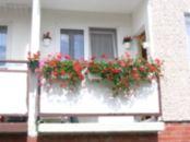 noclegi Tanie komfortowe mieszkanie Muszelka Rogowo 61e/2 - 601628144 Rogowo